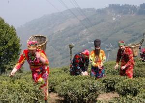 Darjeeling 2006